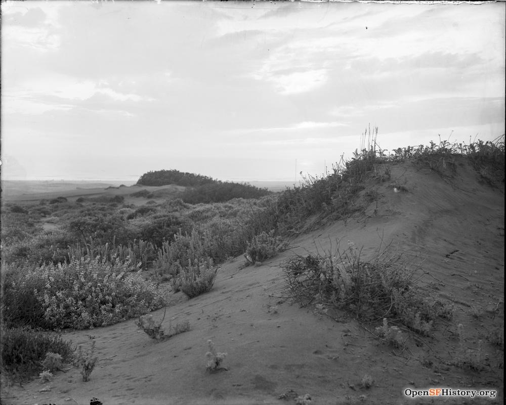 historic dunes